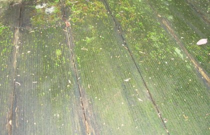 Antimousse bois - Anti mousse terrasse bois ...