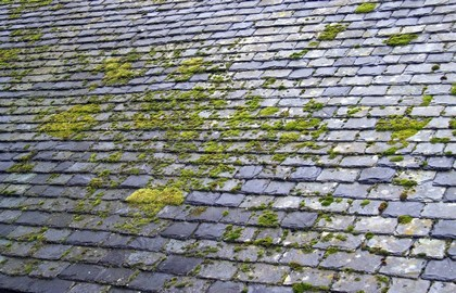produit pour d mousser un toit en ardoise